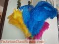 Nós fornecemos penas para o samba e decoração de casamento, aniversários e muitos outros