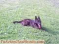 Adiestramiento canino a domicilio en todo Stgo