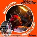 BRUJO NEGRO DE GUATEMALA  (00502)  33427540